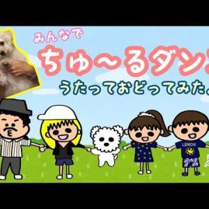 【おもしろ動画】【踊る犬】リモートで♪マルプーぺろんくんと、みんなでちゅーるダンス踊ってみました🐶✨【犬YouTube】