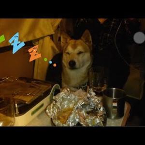 【犬のおもしろ動画】おネムなわんこ〜A dog that will endure sleepiness〜