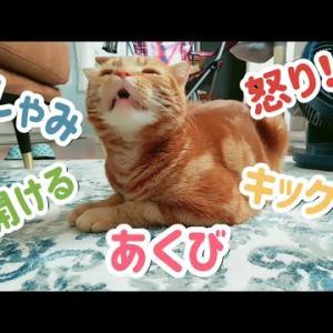 猫のおもしろ動画/くしゃみ あくび 伸び ドアも開けるよ