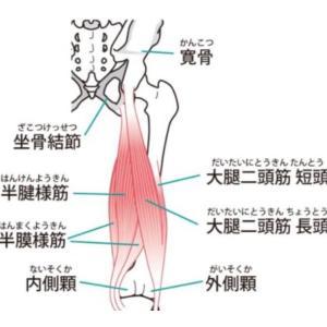 ハムストリングスを考察して怪我を防ぐ