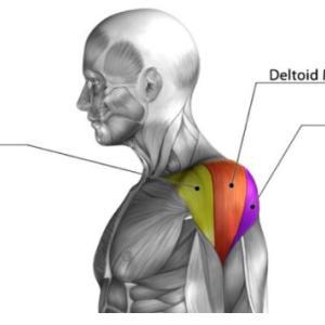 正しい肩の作り方