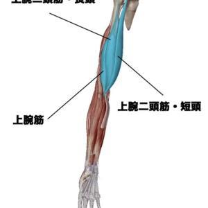 正しい腕の作り方