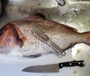 【初心者用】画像で詳しく簡単!家庭用包丁だけで真鯛を刺身にできる状態まで捌いていく!