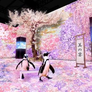 【マクセル アクアパーク品川】海の生きものたちと、桜舞う、花見の宴へ「NAKED SAKURA AQUARIUM」【2020年3月1日(日)~2020年4月19日(日)】