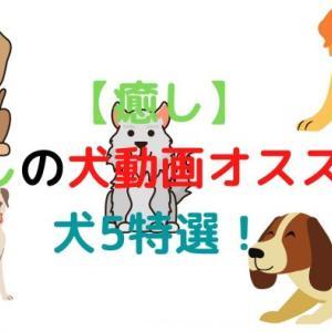 【癒し】癒しの犬動画オススメ!犬5特選!かわいい