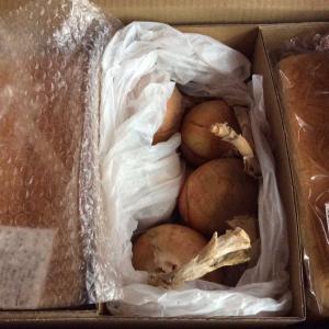 パンと玉葱と
