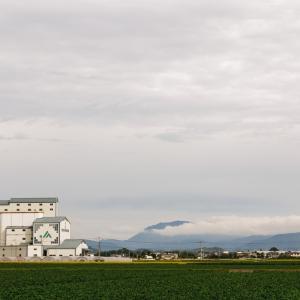 ソーラーシェアリングに最適な農作物は榊!失敗しない栽培方法は?