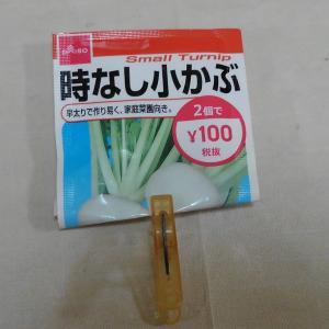 秋野菜のスタート、まずはかぶの種まきから