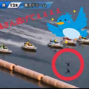 【壱岐のジャッカル】下條雄太郎さん密かに鳥と闘うww【宮島DR】
