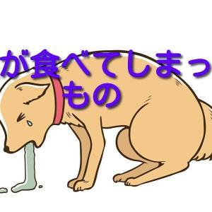 犬が食べてしまったもの