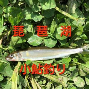 小鮎(コアユ)釣り 釣って楽しく、食べても美味しい簡単小鮎釣りをやってみよう!