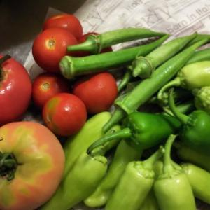 夏野菜を収穫した