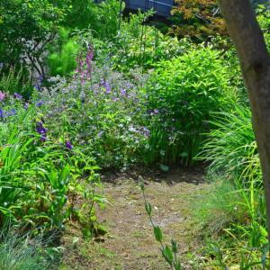 いにしえの表庭1(2017年六、七月の自庭)