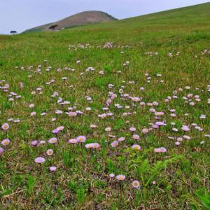 春の寒風山に咲く花。(2010年5月、6月)