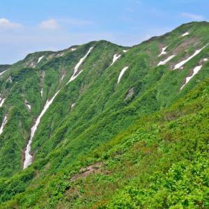 神室山に日本一のキヌガサソウを見た。(2017年6月24日)