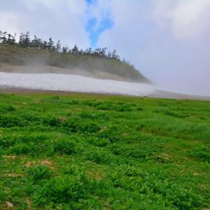 霧の八幡平に咲く花。(2014年7月5日)