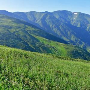 マツムシソウを見に以東岳へ。後編。(2019年8月4,5日)