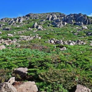 九月の早池峰山はナンブトウウチソウだらけ。(2018年9月11日)