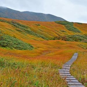 鳥海山・千畳ヶ原はこんがり草紅葉。(2020年10月2日)