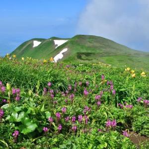 鳥海山・お花見トレッキング。後編(2021年7月15日)