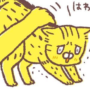 ウチの猫が変わってるのかもと思った時