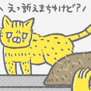 生息地を奪われた野生動物顔の猫