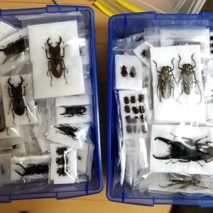 【標本】2019.0824 標本保存