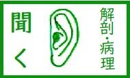 【素材】 聴覚(解剖・病理)