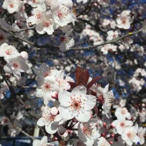 こちらは春が近づいてきてますよ〜