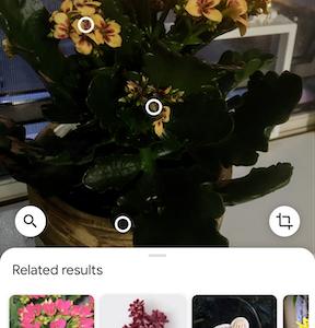 Google Lensで遊んでみた