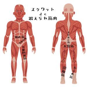 簡単に体脂肪を説明!増えた体脂肪どうする?体脂肪の落とすのに役立つスクワット説明付き