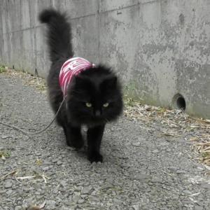 初めまして、黒猫キキくんです