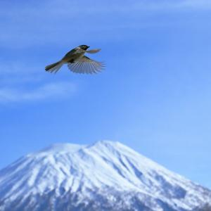 羊蹄山を越えてはばたく鳥たち②