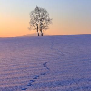 雪面にキツネの足跡