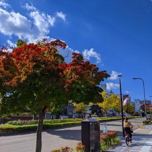 2020年 10月20日 宮城県仙台市の榴ヶ岡公園の散策と諏訪神社