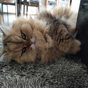 動かない猫