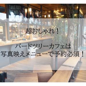 【大阪/南千里】超おしゃれ!バードツリーカフェは写真映えメニューで予約必須!