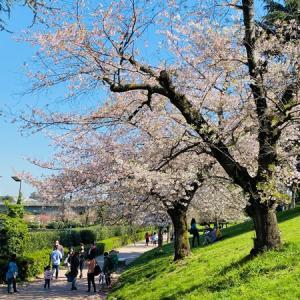 【エウル湖】ローマのお花見スポットに行ってきました!