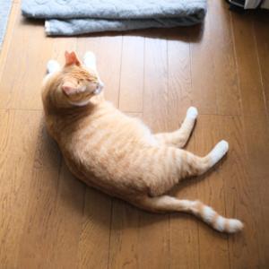 【我が家のオトラ&チャイ】2020.7.10