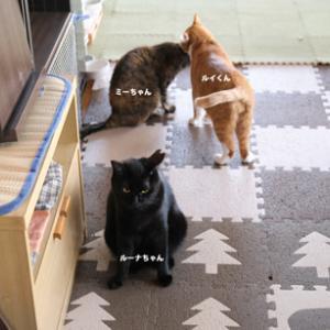 【ネコノミカタ】2020.9.27 定休日