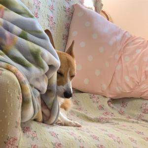 久しぶりに犬の新作動画「シャンプー」