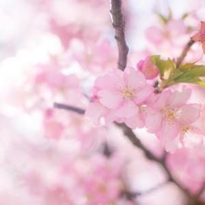 花粉症対策ランチ