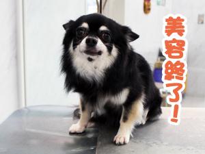 アトムくん☆ノアちゃん☆レオンくん☆まめ太くん☆花ちゃん