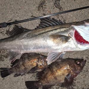 2021年初釣行でメバル、シーバス、アジ、根魚多数。富山のホタルイカパターンはもうはじまった?