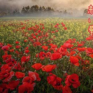 赤い華 5