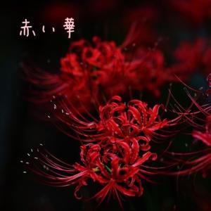 赤い華 54