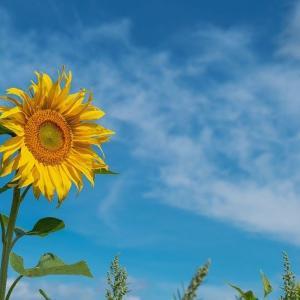 「誰だって、自分の物語の中にいる」道尾俊介『向日葵の咲かない夏』書評