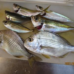今年の初釣り~糸島・野北の波止でヘダイ、アジ、サバを釣る