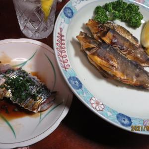 糸島・船越で波止釣り~アイナメ、コノシロが美味い