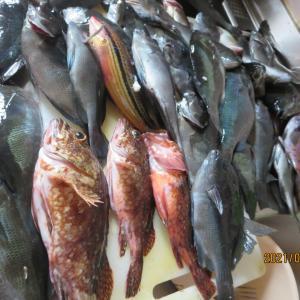 福岡県の離島で梅雨グロ釣り~一週間魚三昧
